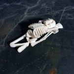 yoga-skeleton-1